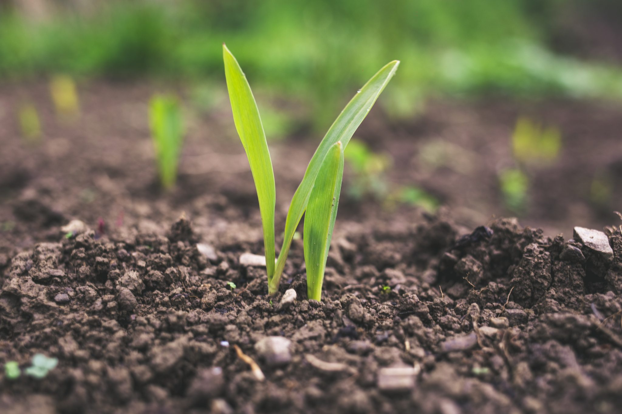 agriculture DP wp
